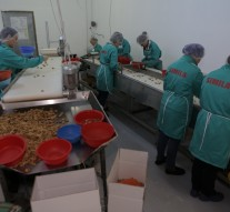 Simila workers